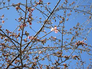 桜も咲き始め