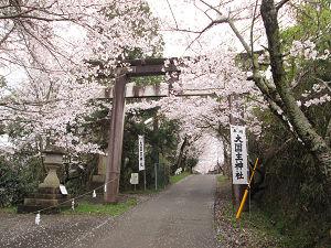 大国主神社の桜