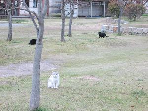 彦根城金亀公園の猫