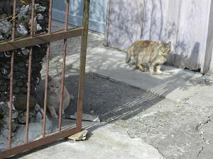 安房の街猫