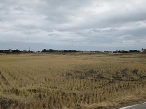 東浪見の冬の田