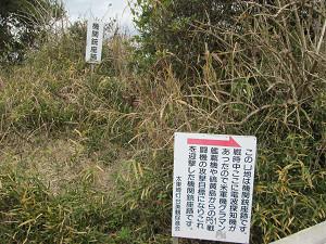太東崎灯台ちかくの機関銃座跡