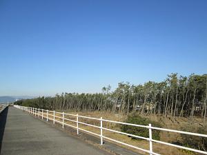 堤防の上の道
