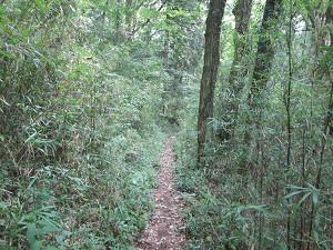 笹林を進む