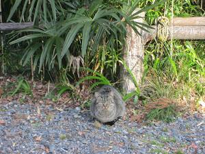 笠森寺境内の猫
