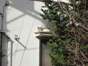 民家の屋根の猫
