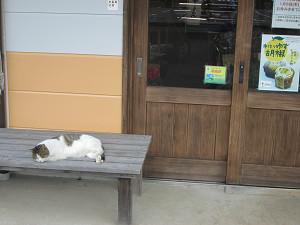 長柄ダム直売所の猫