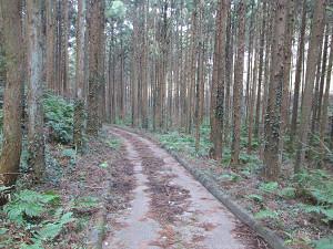 村田川沿いに下る道