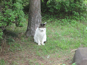 手賀沼の猫