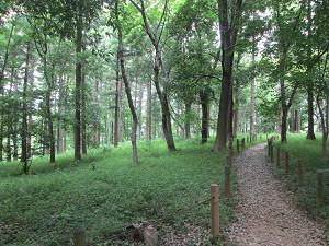 林の中の散策路