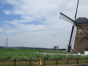 佐倉の風車とひまわり