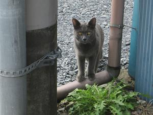 常陸太田の猫