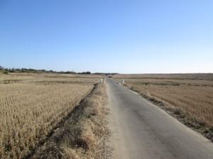 しばらく農道を行く
