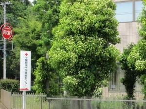 千葉県赤十字血液センター
