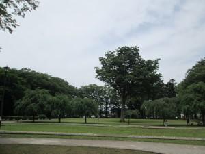 けやきの森公園