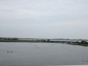 湖面がきれいになった印旛沼