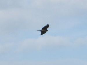 風に遊ぶ鳥