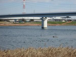 かもが集う江戸川