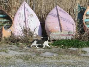 船宿をゆく猫