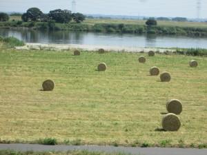 利根川河川敷に牧草ロール