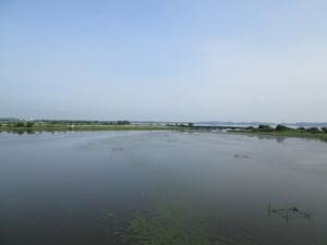 印旛沼の藻も成長中