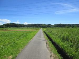水田の中の道