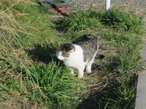 河川敷の猫