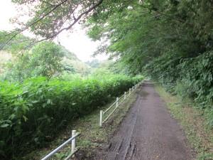 花見川遊歩道