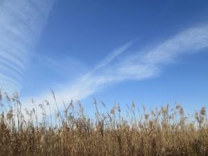 芦原に高い雲