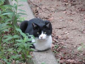 花島公園の猫