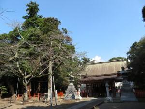 本殿と御神木